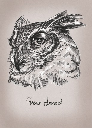 Great Horned Owl illustration