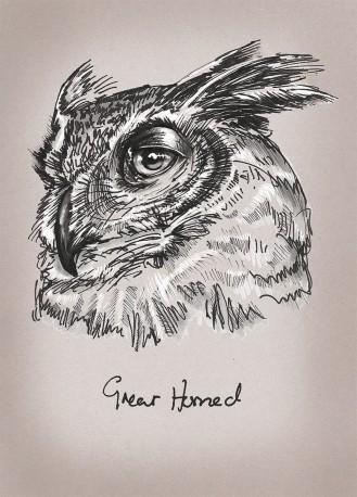 Great Horned Owl illustration