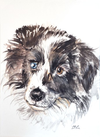 Custom dog portrait, watercolour and ink