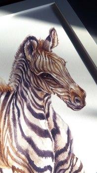 Zebra illustration print by illustratorlaura