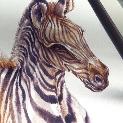 Zebra illustration print by illustratorlaura